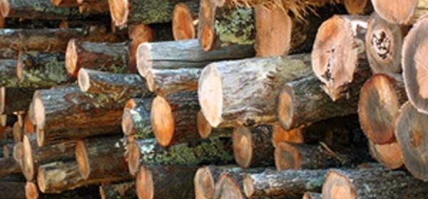 Drva - na vrhu svih krađa