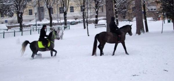 Konji bijeli, konji vrani ... zekani ponajviše