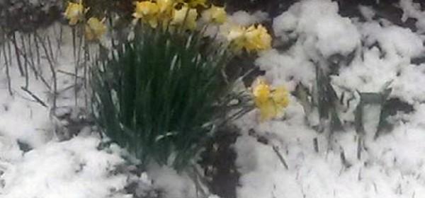 Proljeće ili zima? Zimljeće možda?