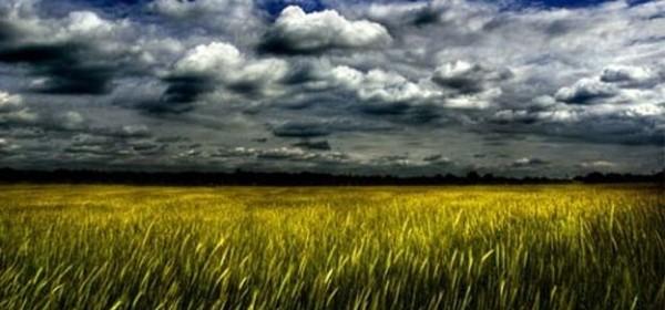 O zajedničkoj europskoj poljoprivrednoj politici i poticajima