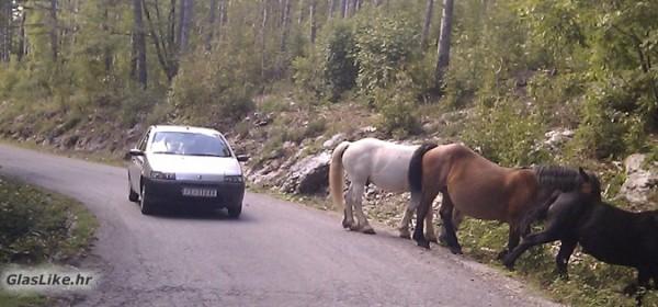Prometna nesreća zbog konja lutalica