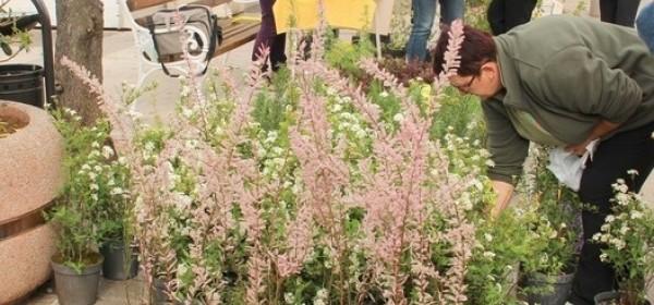 Prodaja sadnica i čišćenje senjske luke