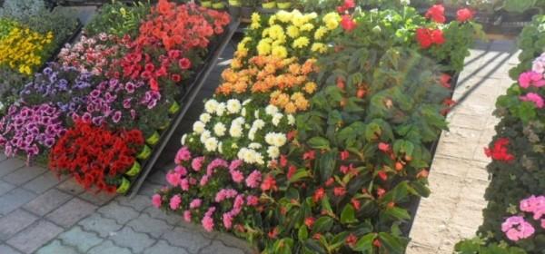 Placa puna cvijeća