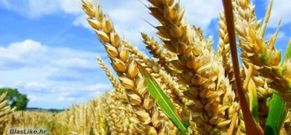 Potpora razvoju malih poljoprivrednih gospodarstava - poziv na edukaciju
