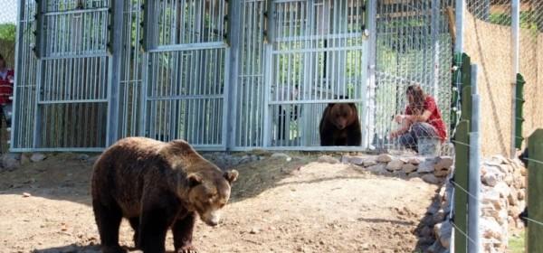 Dva medvjeda iz Splita stigla u Kuterevo
