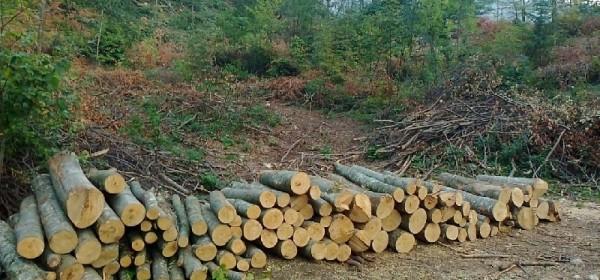 Šumska krađa u Jelvici