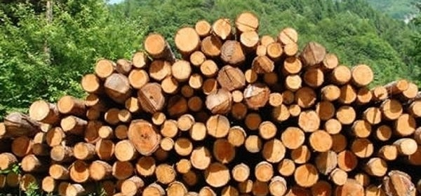 Osumnjičen za krađu drva