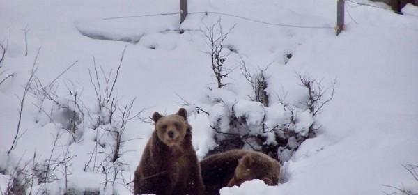 Medvjedi i ljudi kroz 2014., nove aktivnosti u 2015. godini