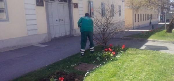 Uređenje cvjetnih gredica i zelenih površina