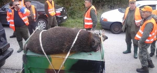 Skupni lov u Dabru završio uspjehom