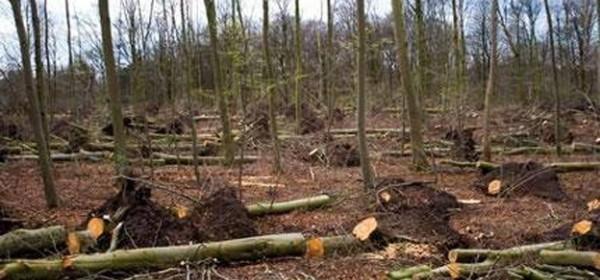 Krađa drva i provale