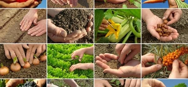Krenulo financiranje projekata malih poljoprivrednika