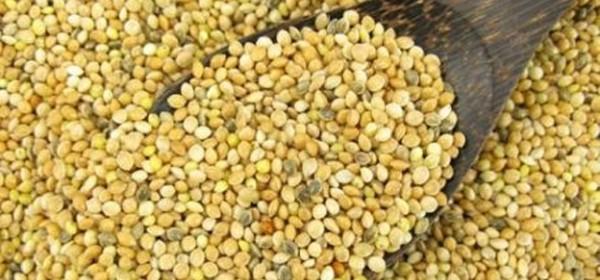 O arheologiji prehrane Japoda