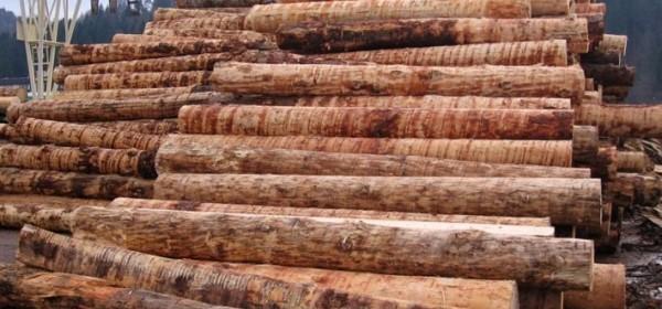 Radionica za drvne prerađivače - prodaja trupaca za 2016. g.