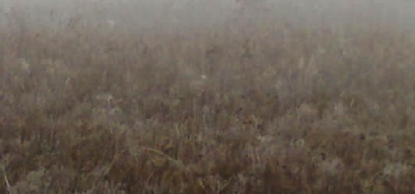 Lov u magli
