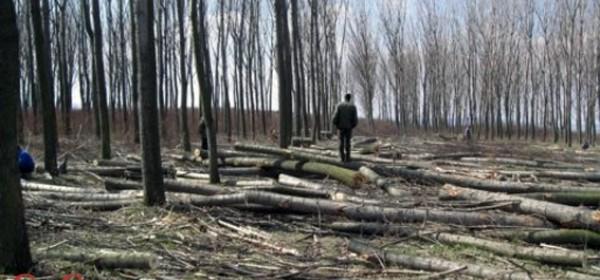 Otkazana radionica o trgovini ilegalno posječenim drvetom