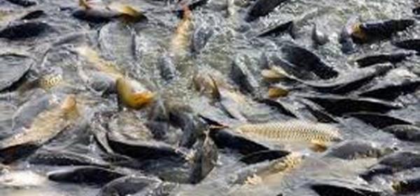 Vaučeri HGK za akvakulturu