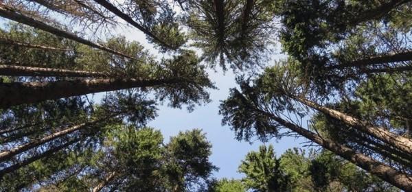 Danas je Međunarodni dan šuma