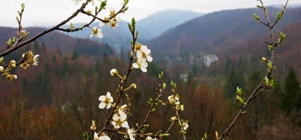 Cvijet najavio zimi kraj
