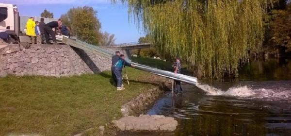 Zbog poribljavanja zabrana ribolova od Murković mlina uzvodno
