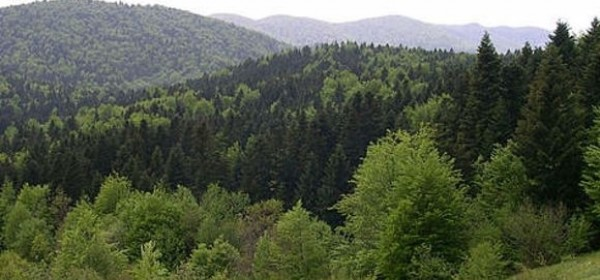 Prezentacija mjera iz Programa ruralnog razvoja RH koje se tiču šumarstva u Brinju