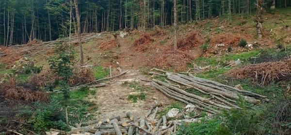 Je se nakrao šume, što jest, jest