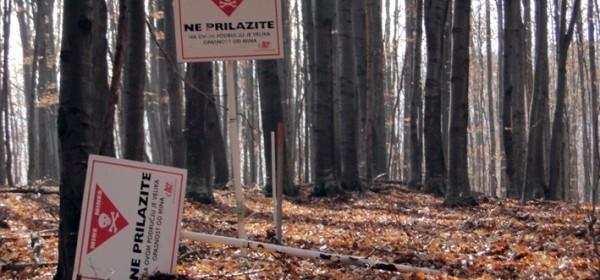Krađa drva u minski sumnjivomu području