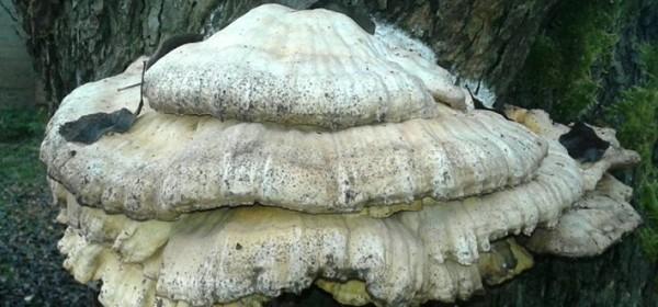 Gljiva i zakresalo
