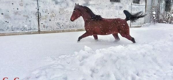 Kad konji propraše cjelcom