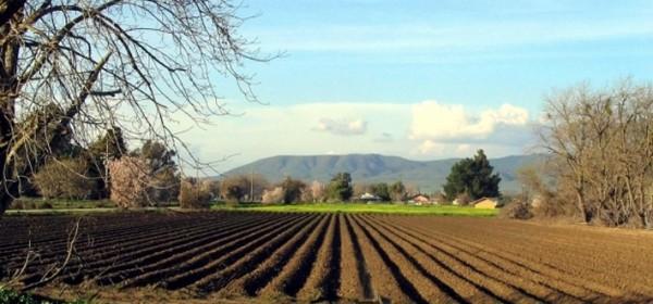 Jučer započele isplate potpore poljoprivrednicima