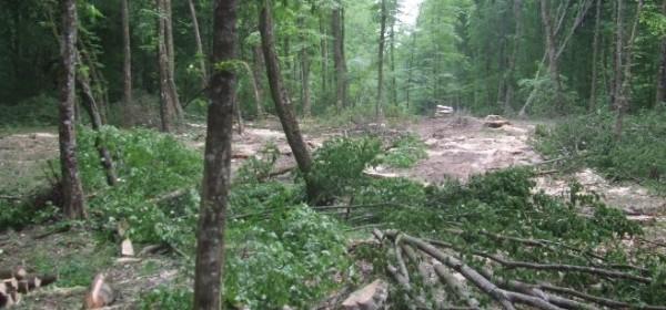 Krađa drva u miniranom području kod Čanka