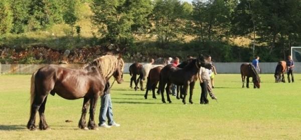 3. izložba konja u Krivomu Putu