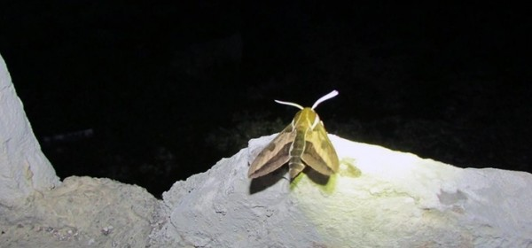 Noć leptira - na Plitvičkim jezerima