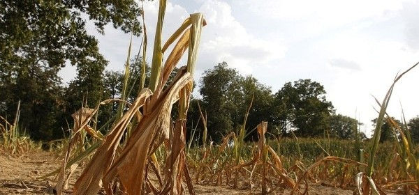 Župan proglasio elementarne nepogode suša za Brinje i Gospić