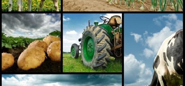 """LAG Frankopan - Javni poziv """" Potpora razvoju malih poljoprivrednih gospodarstva """""""