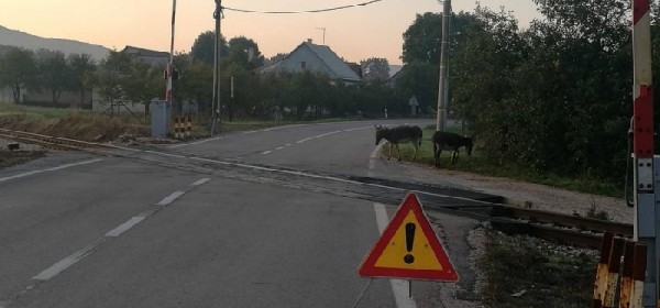 I magarci na pružnom prijelazu