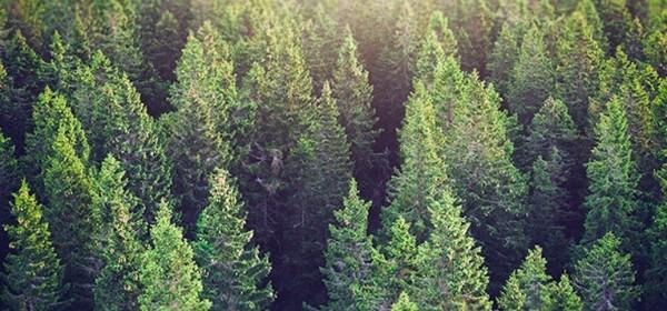 Potpore za ulaganje u šumsku infrastrukturu