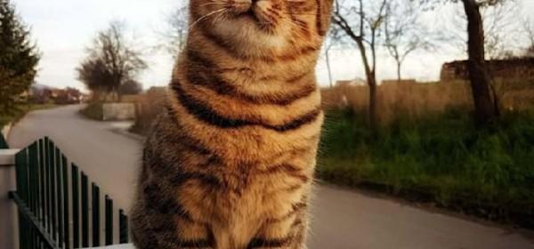 Mačka ti je ... mačka ti je ... - mačka!