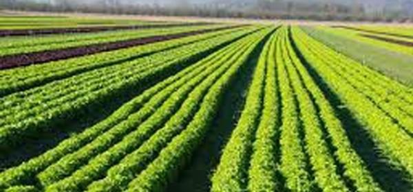 O mjerama 6 u poljoprivredi - 26. veljače u Otočcu