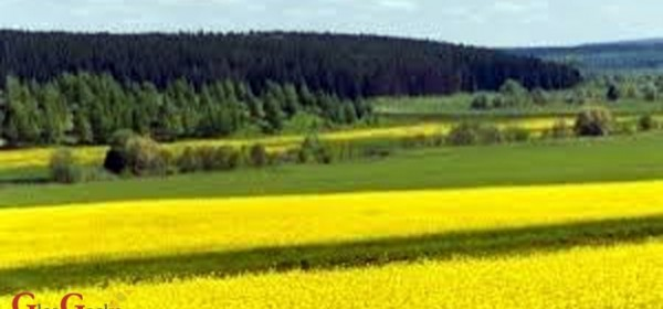 Novac i za cvjetne i travne trake
