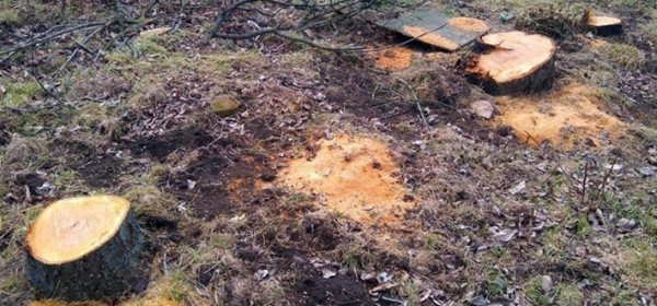 Policija ukebala kradljivce šume