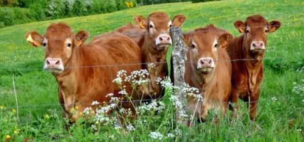 Potpore malima poljoprivrednim gospodarstvima