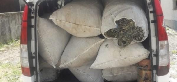 Oduzeto 226,4 kg smilja u Zalužnici