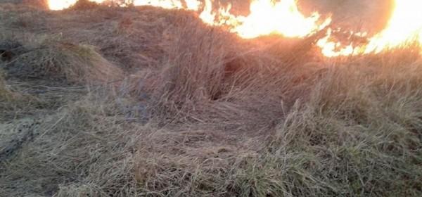 (Ne)kontrolirana paljenja suhe trave i korova