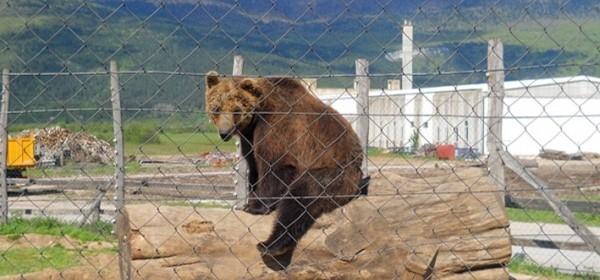 Macoli oduzimaju medvjede