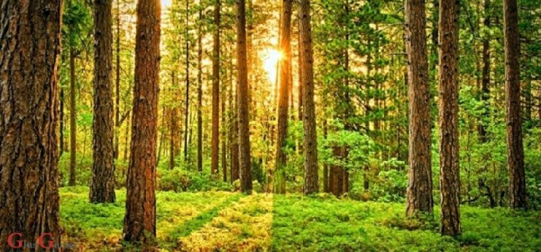 Državno šumsko zemljište stočarima u zakup na 10 godina
