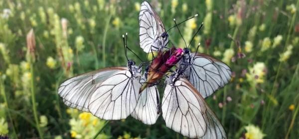 Dan leptira - 12. srpnja