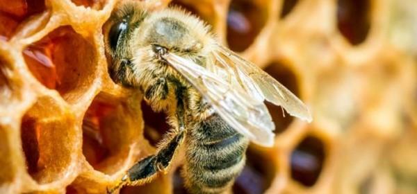 Namireni pčelari iz poticaja