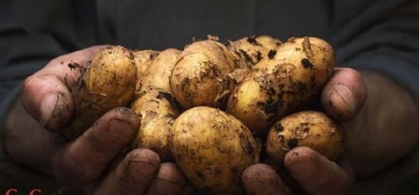 U tijeku skupljanje hrane za sjemeništa