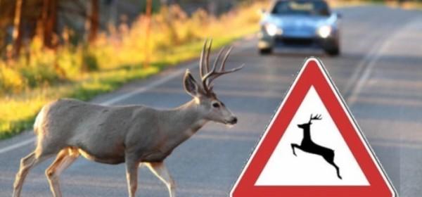 Financiranje jedinstvene police osiguranja za štetu od naleta vozila na divljač